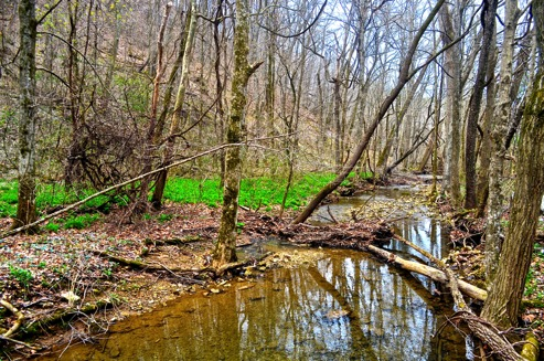 Mountian stream